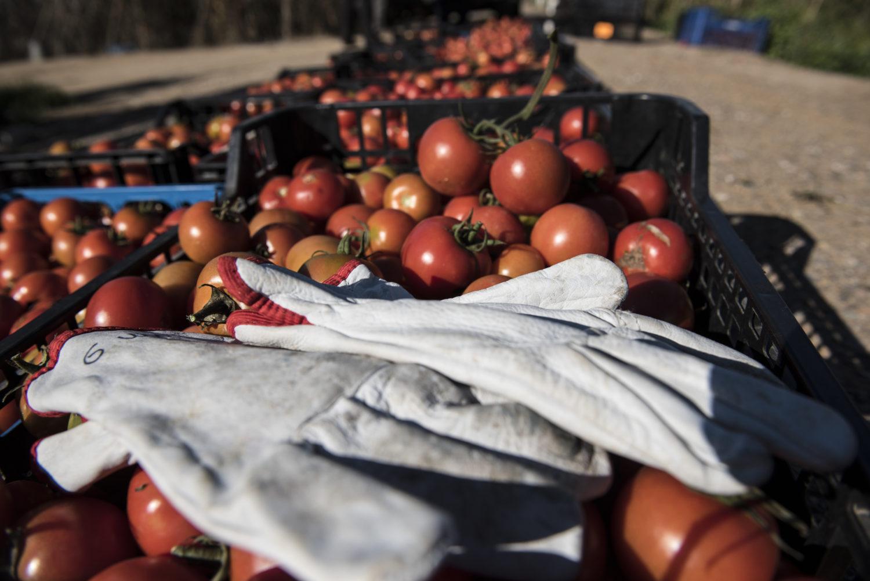 Projecte Espigoladors és un projecte social per a dir que el menjar no es llença